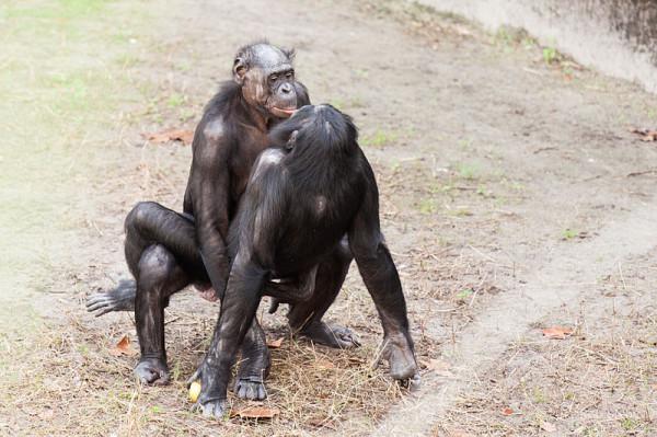 Sex_Animals-1