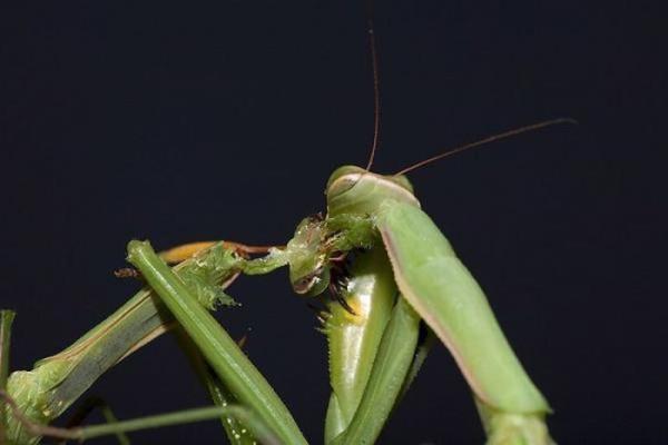 Sex_Animals-9