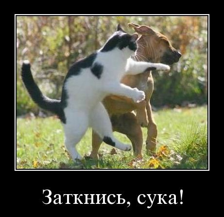 Поболтаем? not_talk_06