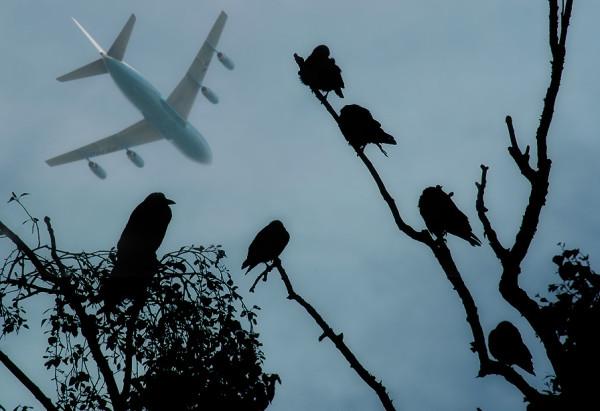 Молния и самолет: стоит ли авиапассажирам опасаться