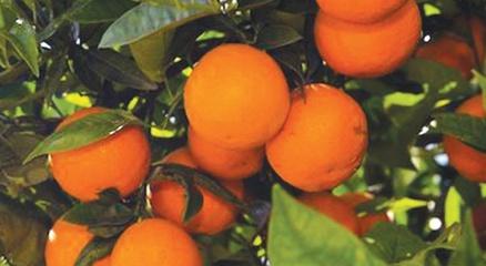 Fruit_plants-2