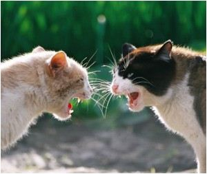 Cat_Fight-3