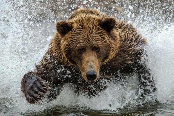Day_Bear-07