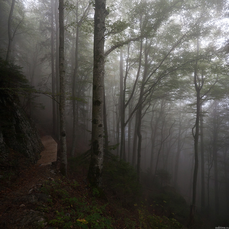 IMG_2495-Panorama