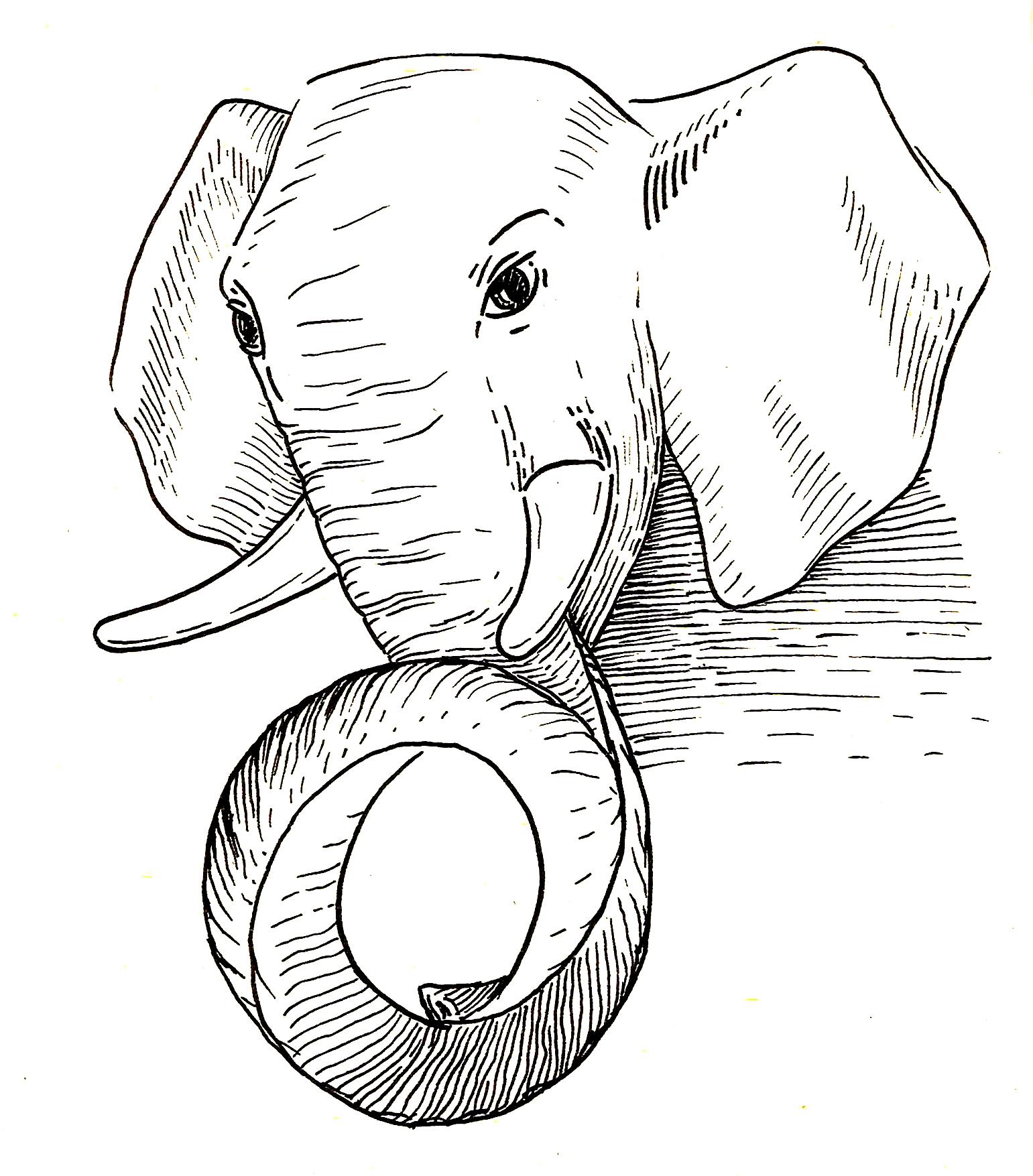 slon_1.jpg