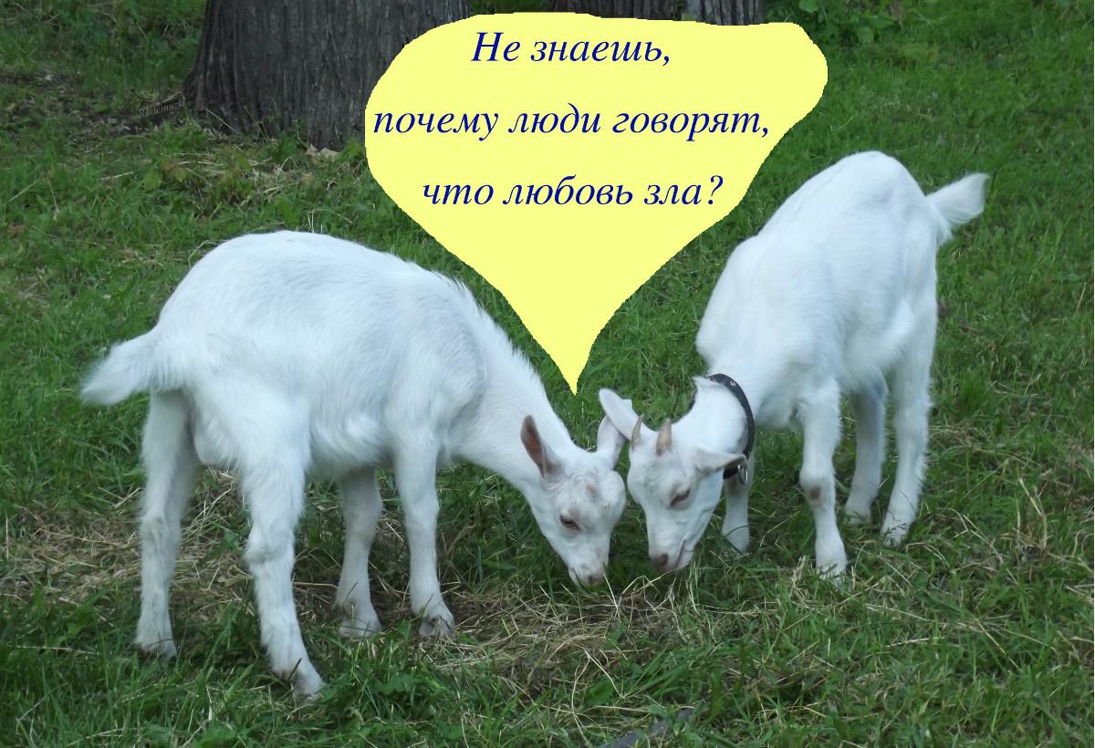 Любовь зла...