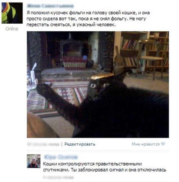 кошки с фольгой