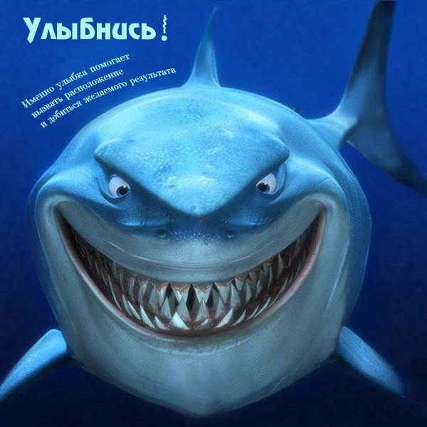 акула улыбнись