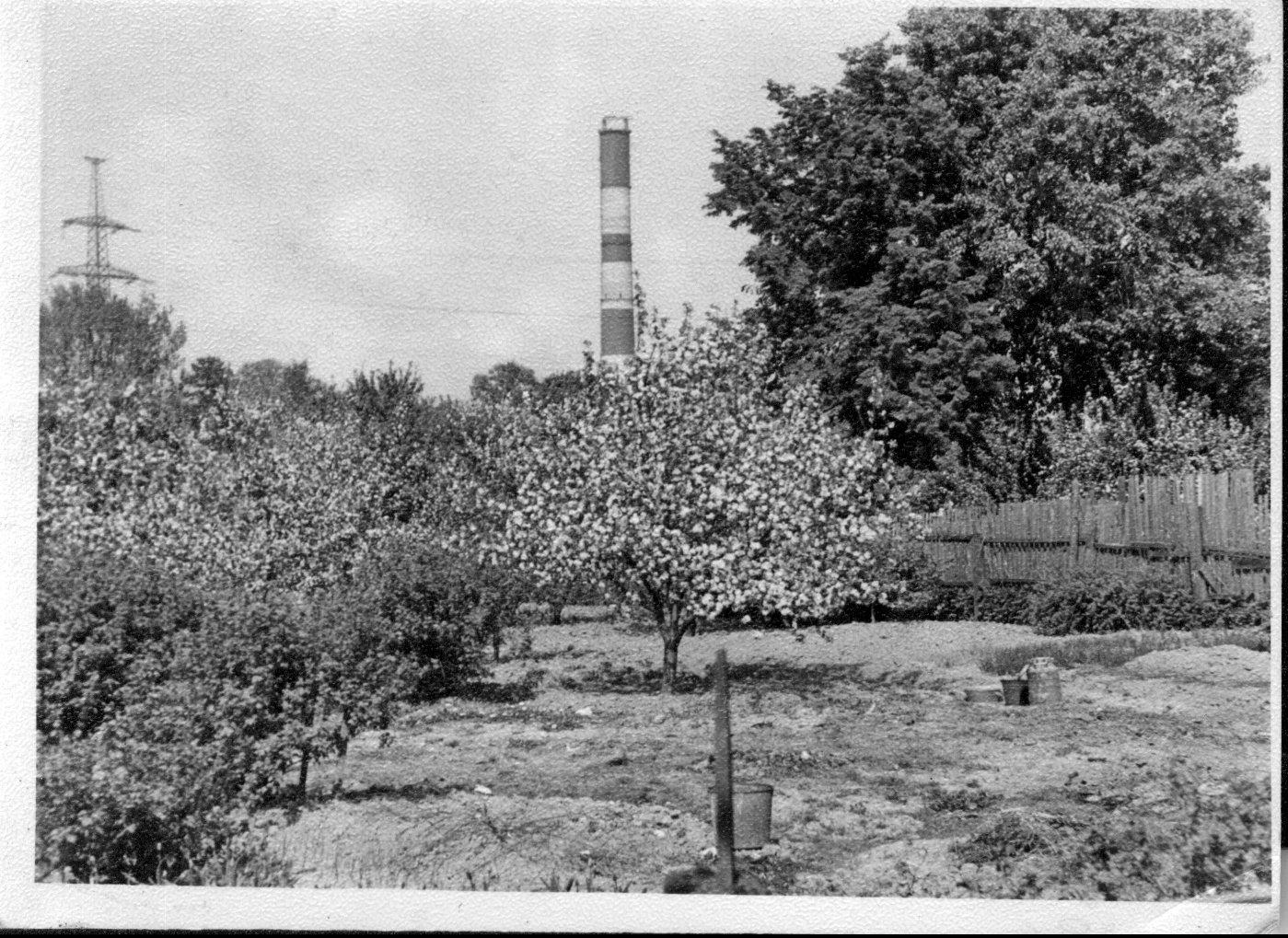 1972 Яблоневый сад. Москва, деревня Очаково, дом 64 (ныне это территория бизнес-центра West-парк). Ольга Королькова