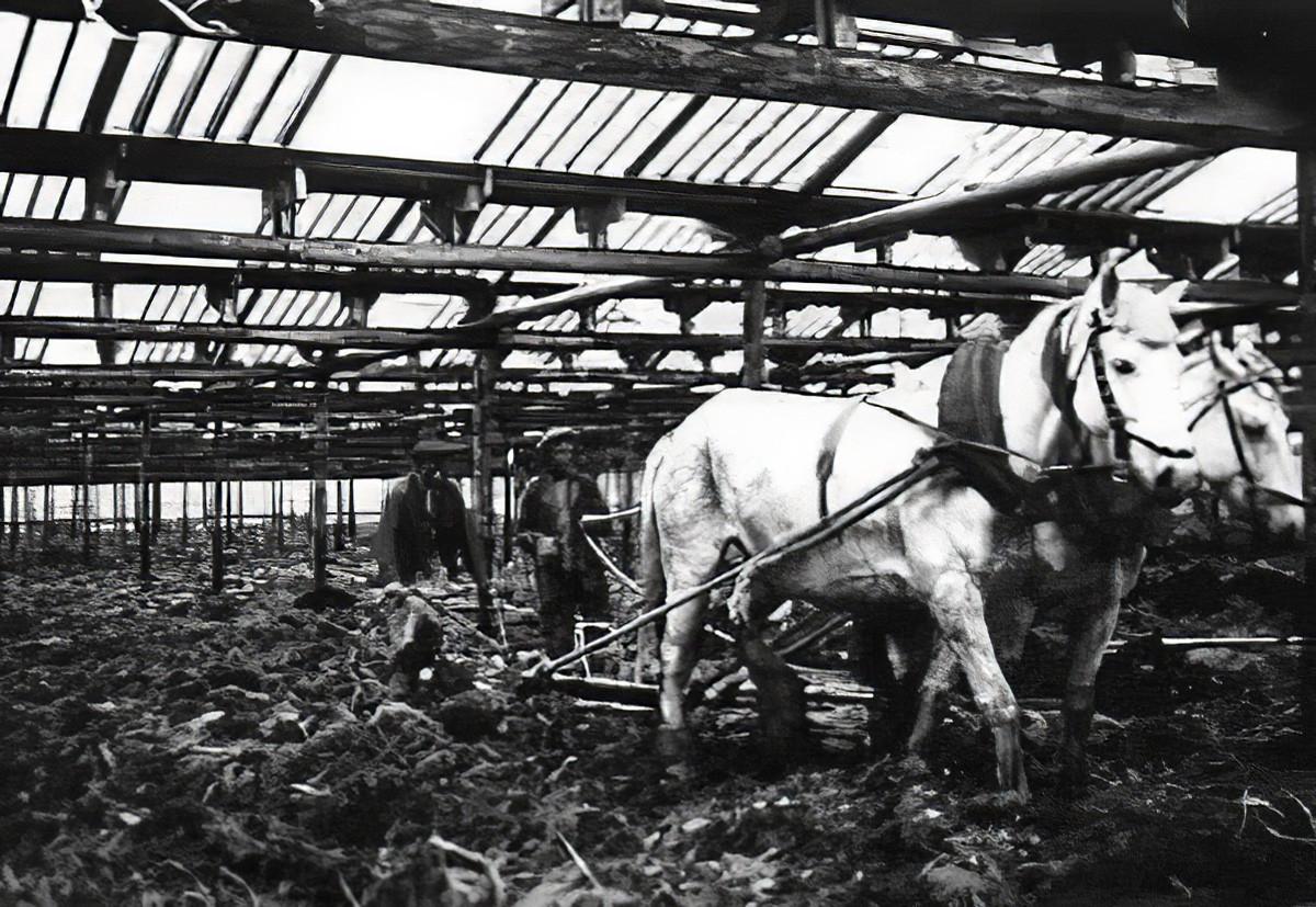 1932 Вспашка грунта в теплице совхоза Очаково под посев овощей_cmpk