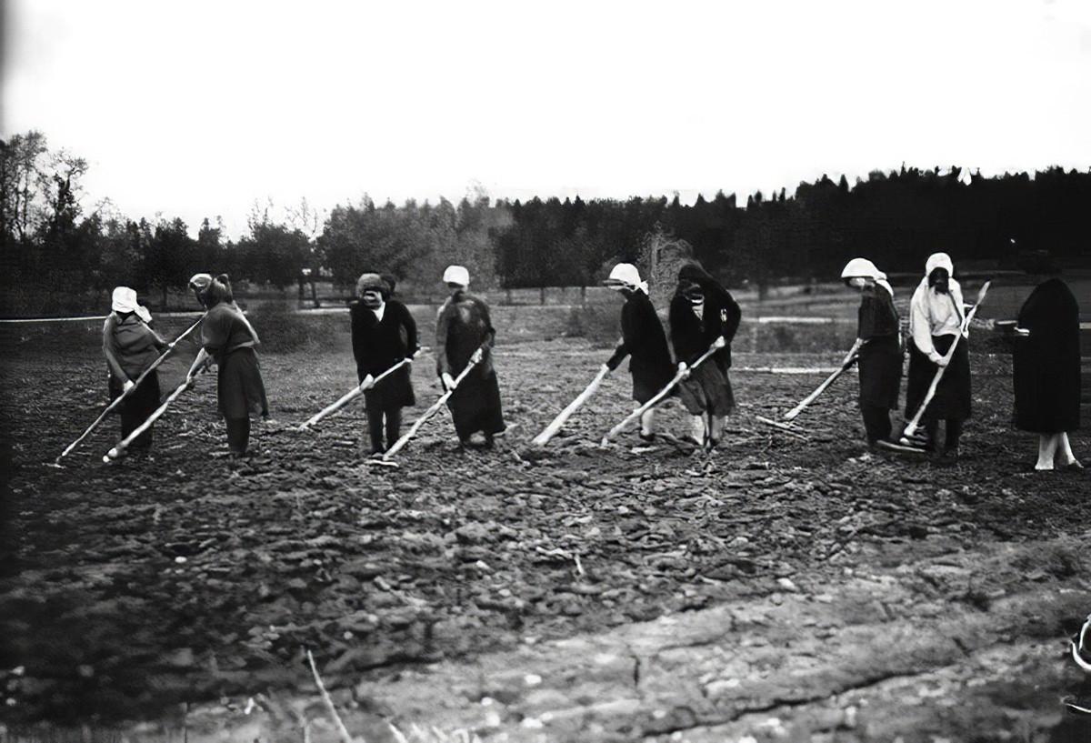 1933 Колхозницы проводят работы по рыхлению посева моркови в совхозе Очаково_cmpk