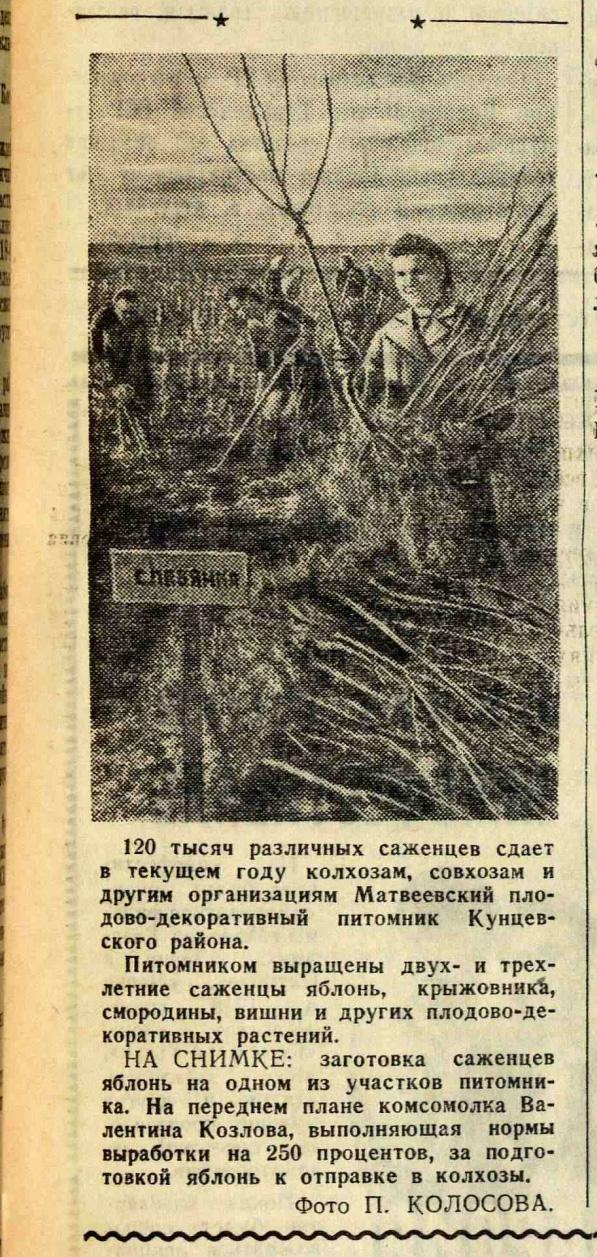 1948 Плодовый питомник. Московский комсомолец, 1948, № 122 (978), 7 октября
