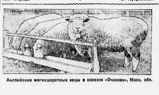 1929 Пионерская правда. 1929. № 121 (379)
