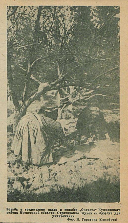 1932 Огонёк №17 (441). С.13