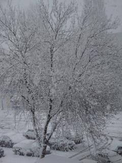 снегопад 17 марта 2010 года