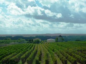 Виноградники Коньяка