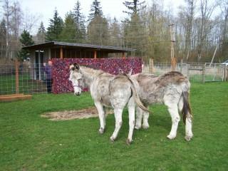 Kathryn Glowen homestead with donkeys and yoyos