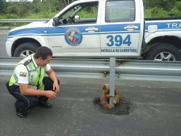 спасение-пытался-sloth-живность-2795591