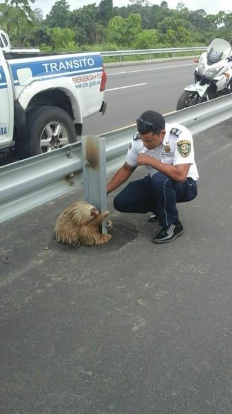спасение-пытался-sloth-живность-2795592