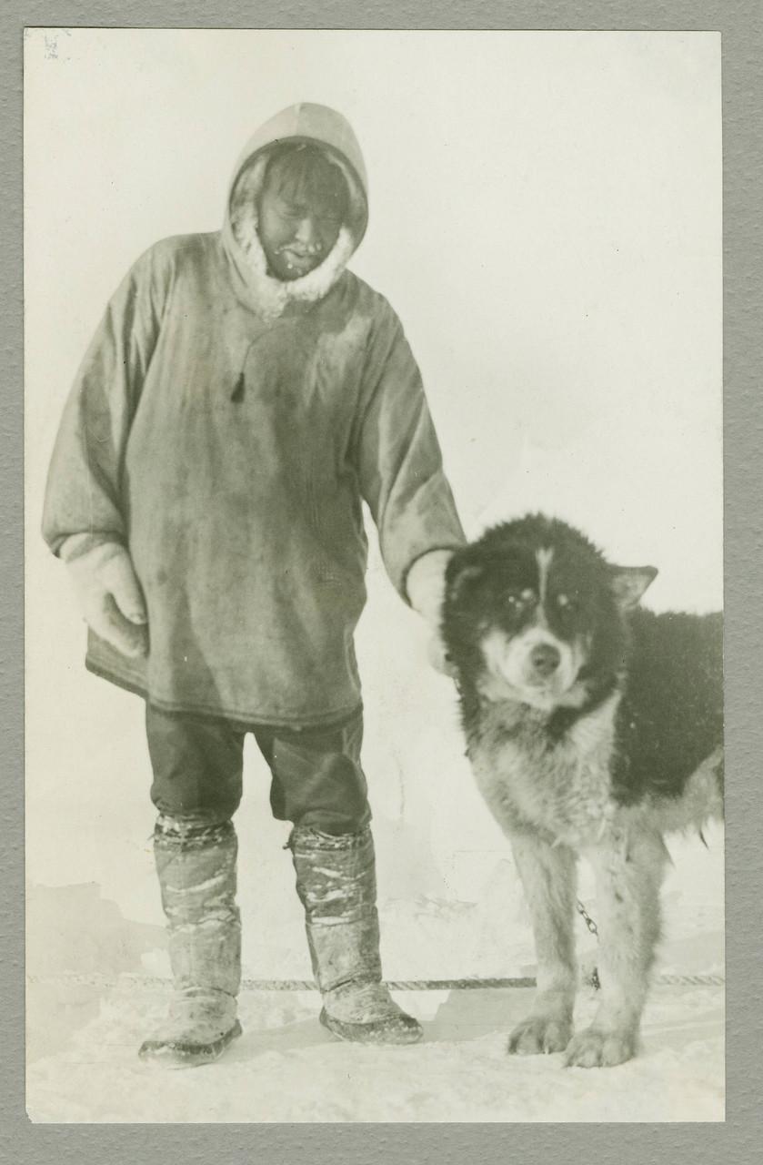 stem229_0280102f Смешанная  Св . Бернард и эскимосский  собака   .jpg