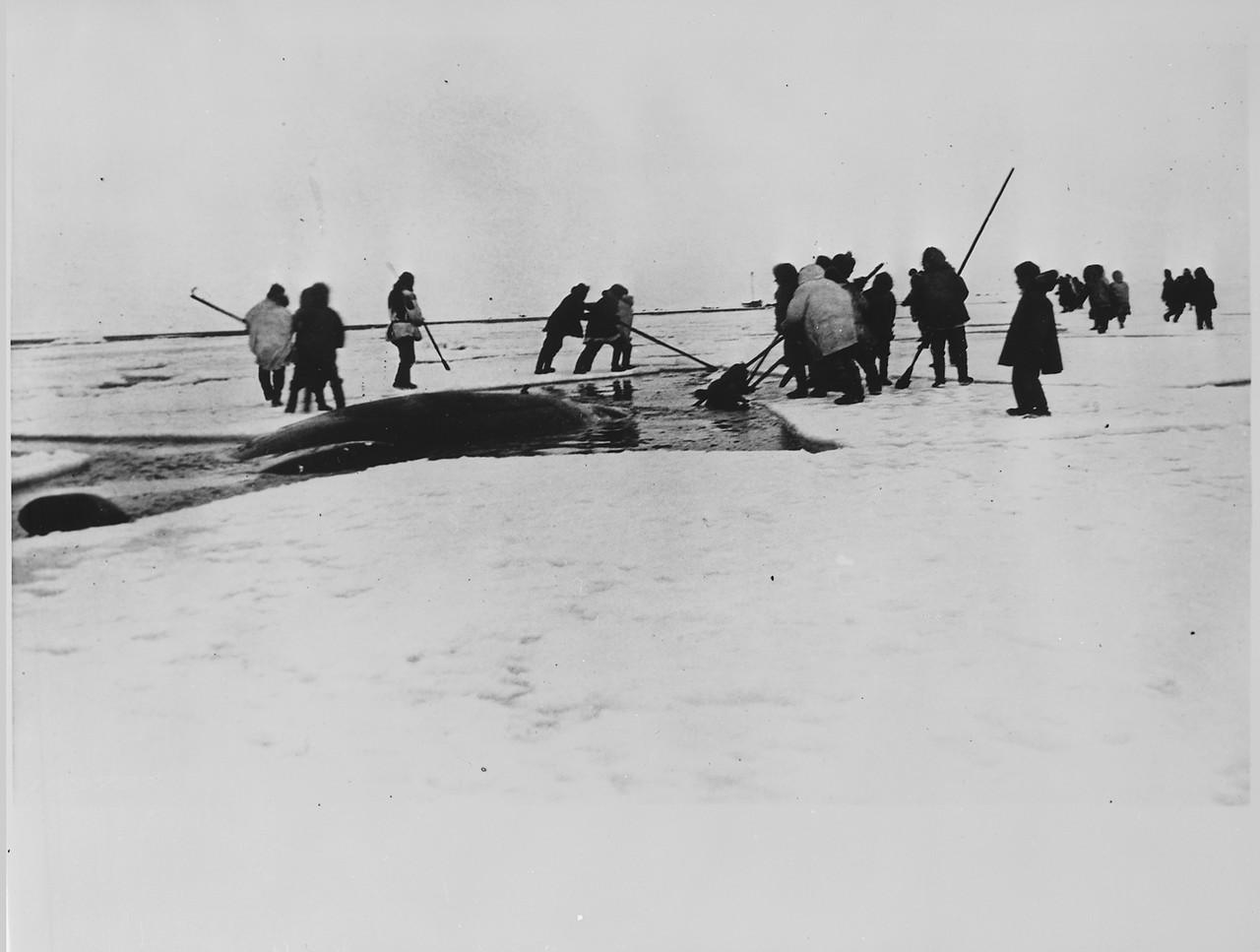 Eskimos_harpooning_a_whale,_Point_Barrow,_Alaska,_1935__-_NARA.jpg