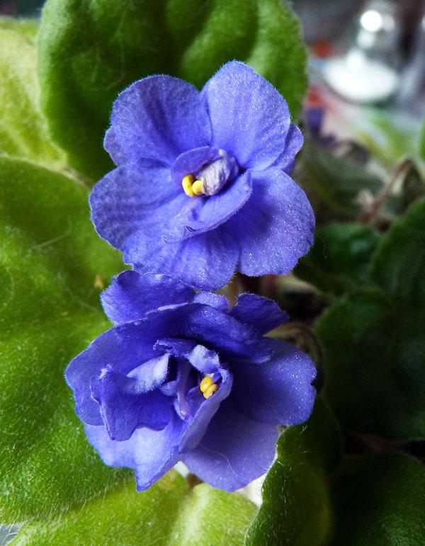 Цветы_002