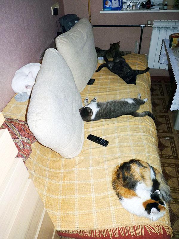 Коты_001