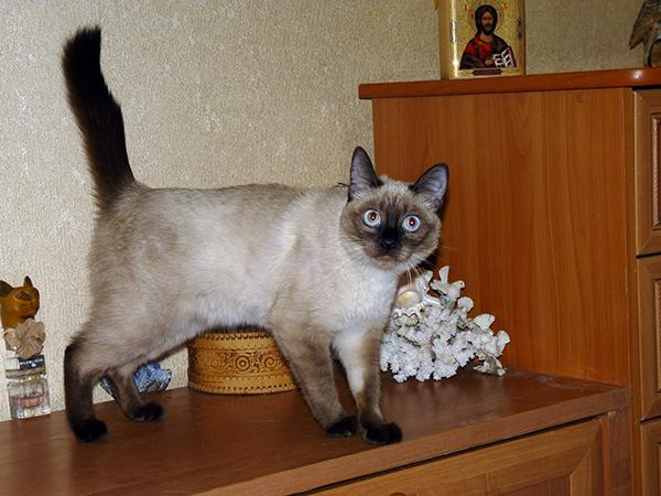 40_кошек_025