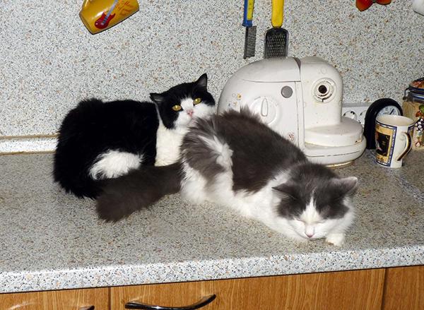 40_кошек_003