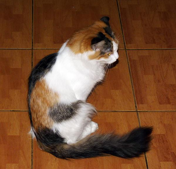 40_кошек_012