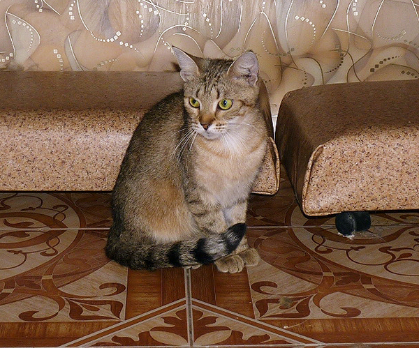 40_кошек_014