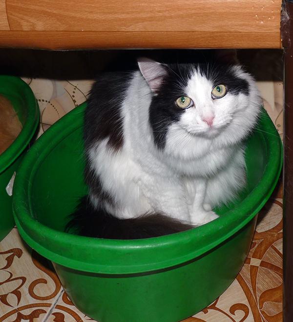 40_кошек_016
