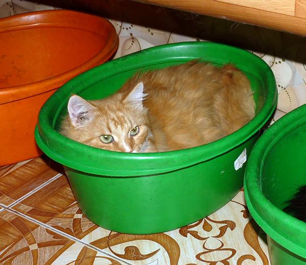 40_кошек_017