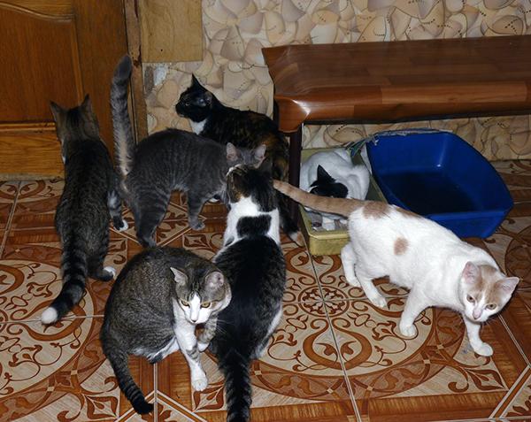 40_кошек_026