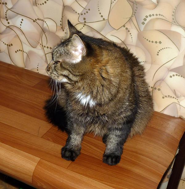 40_кошек_028