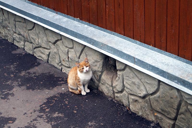 Кладб_кошки_020
