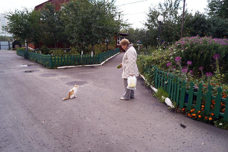 Кладб_кошки_021