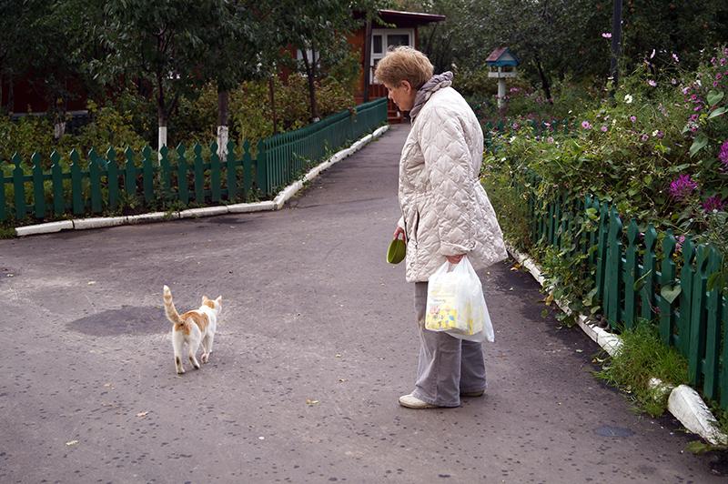 Кладб_кошки_022