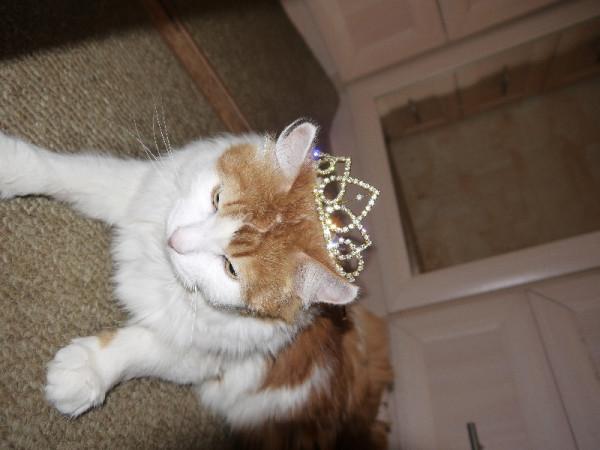 Вася в короне
