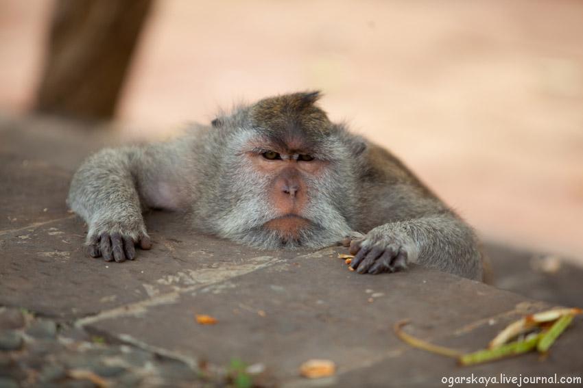 Фото обезьян на пляже 97