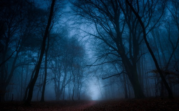 Forest-trees-fog-path-dusk_1920x1200.jpg