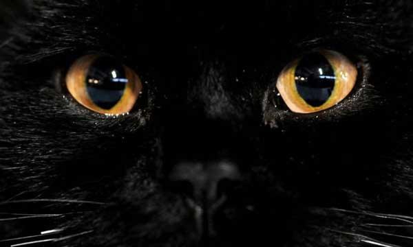 О глазе - Как видят мир животные?