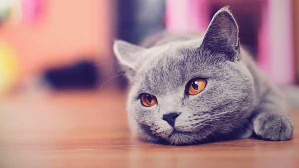 Биологи обнаружили ультрафиолетовое зрение у многих млекопитающих