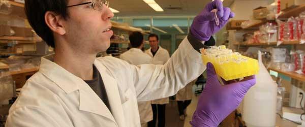 на стенках кровеносных сосудов обнаружены фоторецепторы