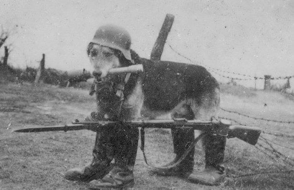 Немец Собак
