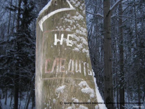Дерево в Балатовском парке-1