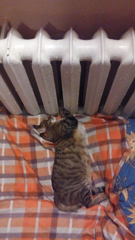 кошка Чуча и батарея