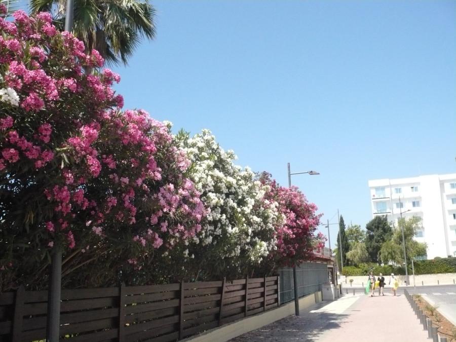 2016-05-30_Cyprus_10.42.30