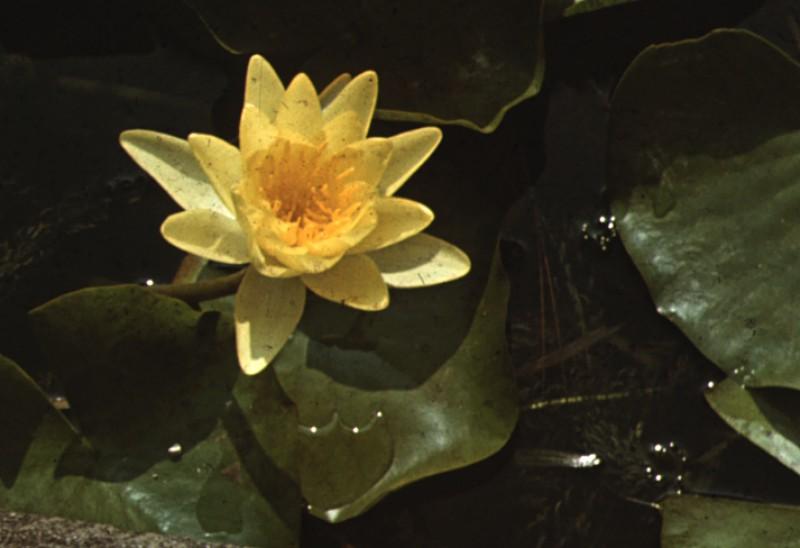 1974 Сухуми (29)