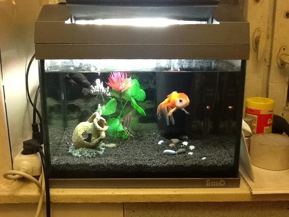 Аквариум купить продать аквариумы со скидкой